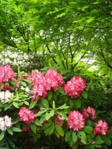 福智山ろく花公園3