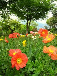 福智山ろく花公園4