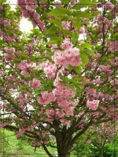 福智山ろく花公園2