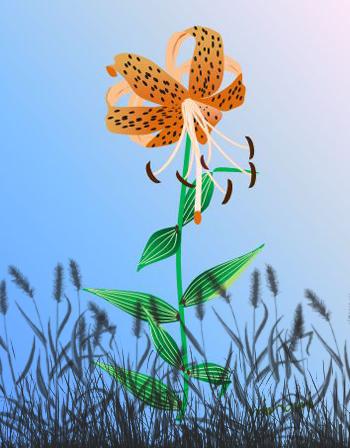 雑草の中のオニユリ