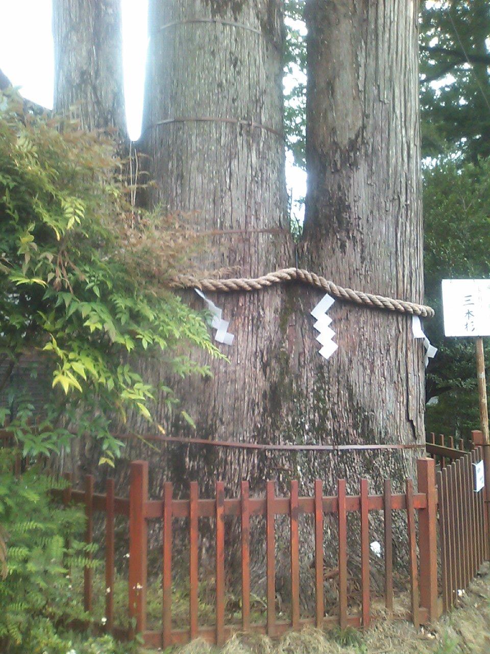 20110522_三本杉
