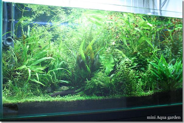 90cm_20100112.jpg