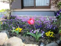 2011.4.25 隣の花3