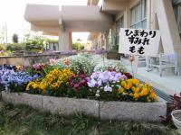 11.4.29 泉川小学校のパンジーなど