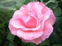 2011.5.22 我が家の花4