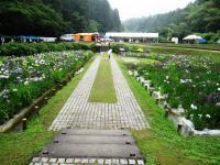 2011.6.12 池田池菖蒲祭り1
