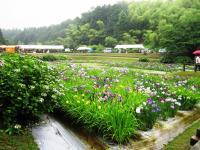 2011.6.12 池田池菖蒲祭り5