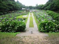 2011.6.12 池田池菖蒲祭り6