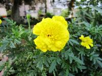 2011.6.23 近所の花1