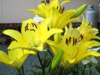 2011.6.23 近所の花3