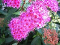 2011.6.23 近所の花6