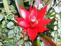 2011.6.23 近所の花7