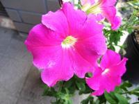 2011.6.23 近所の花8