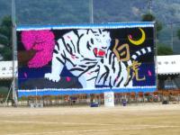 2011.9.10 東高運動会 白虎