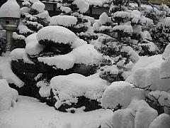 12,19初雪