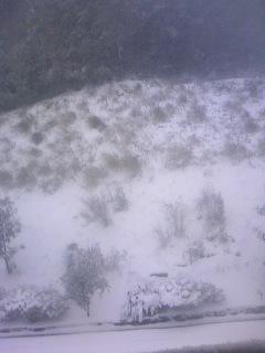 今朝の雪景色1