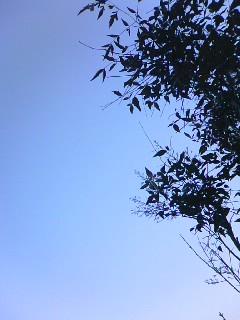 透きとおるような夕方の空!