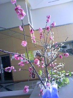 梅の花&桃の花by職場