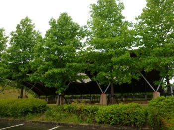 信楽運動公園13