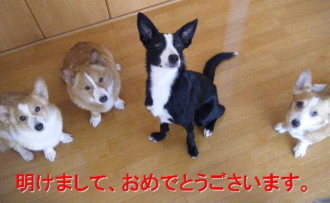 2010_12260009-1.jpg