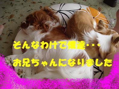 20090728_4.jpg