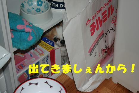 20090808_4.jpg