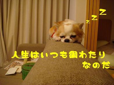 20091004_1.jpg