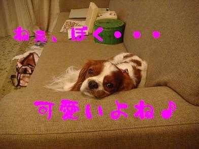 20091004_2.jpg