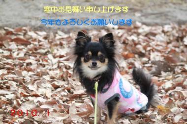 蟇剃クュ隕玖・縺Юconvert_20100106001913