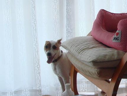 20110515mocha3.jpg