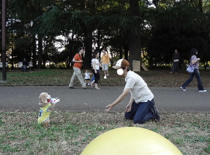 20111016purine3.jpg