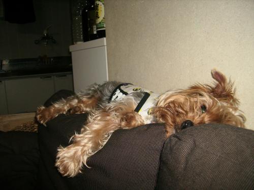 ソファーでねんこホップ
