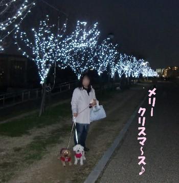 ライトアップお散歩
