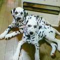 puppyanan20091016.jpg