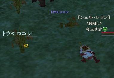 キュリオ:とうもろこし狩り