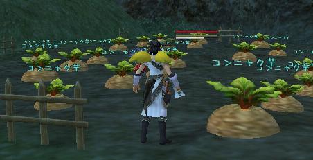 キュリオ:こんにゃく収穫