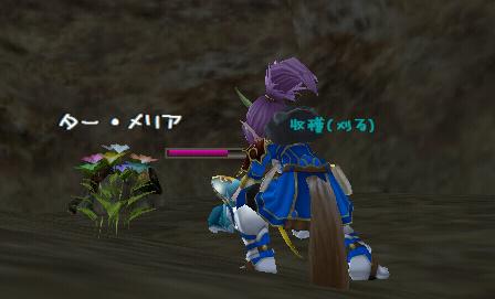 らぴ:花びら収穫