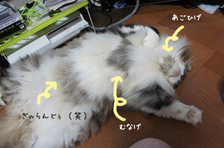 DSC018571.jpg