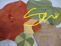 葉っぱのサンポ(覆い)&コースター