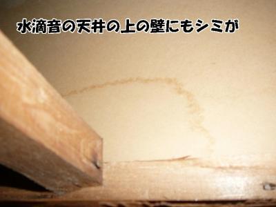 天井の上のシミ