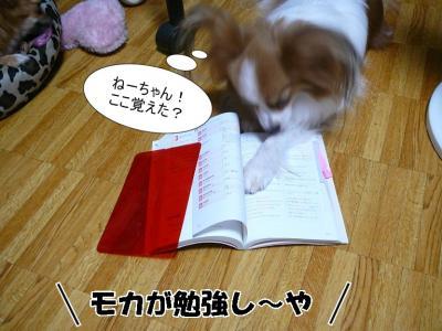 モカとお勉強