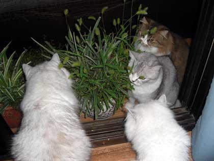 猫じゃらし3