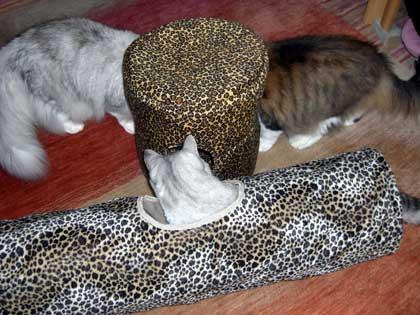 猫ベットとシャカシャカトン