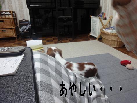 001_20091130222405.jpg