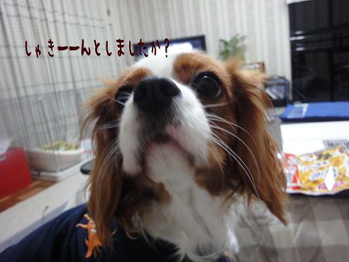 001_20100106220012.jpg