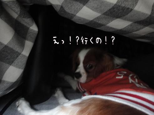 002_20091218190101.jpg