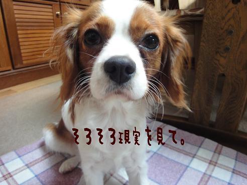 003_20091216204626.jpg