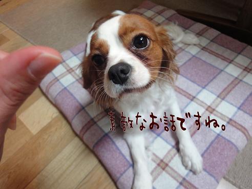 004_20091216204626.jpg