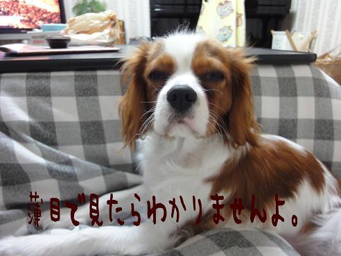 004_20091221223813.jpg