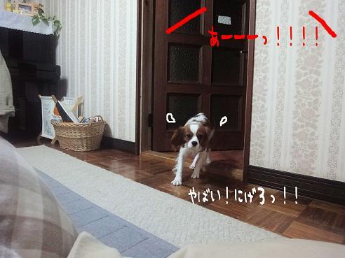 004_20100114223844.jpg